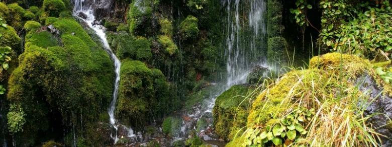 Waitonga-Falls